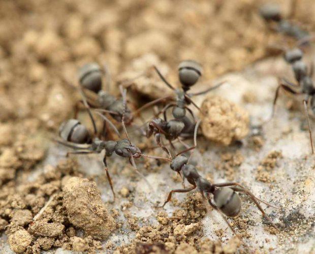 Toyota, maur og søppel : Blogg » Grønt Skift mener om miljø