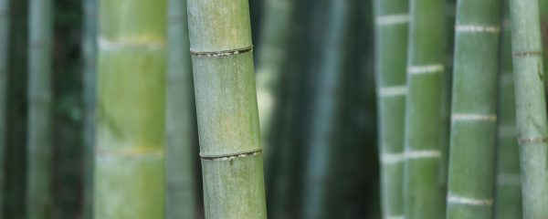 Bambusviskose